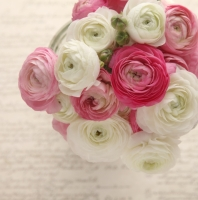PINK AND WHITE RANUNCULUS